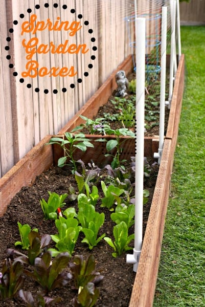 Spring Garden Boxes.  Updated DIY Garden Boxes for Spring.  Backyard gardening.