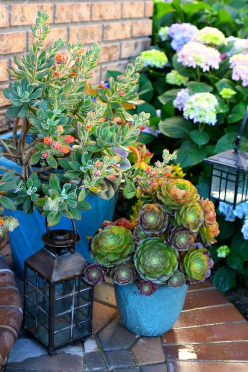 Easy mason jar succulents.