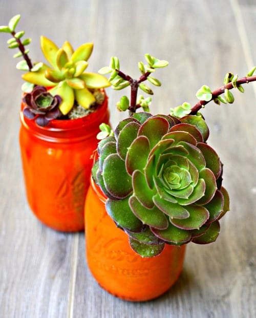 Easy mason jar succulents. Do it yourself.