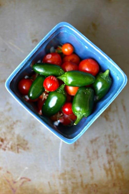 Fresh jalapeno and serrano peppers for Firehouse Salsa