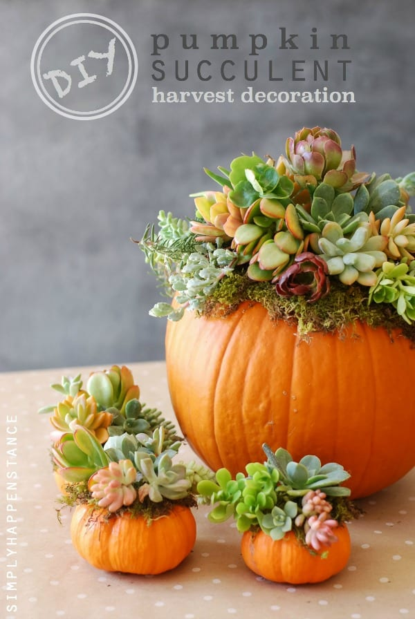 #DIY Pumpkin Succulent Harvest Decoration simplyhappenstance.com & DIY: Pumpkin Succulent Harvest Decoration - Simply Happenstance