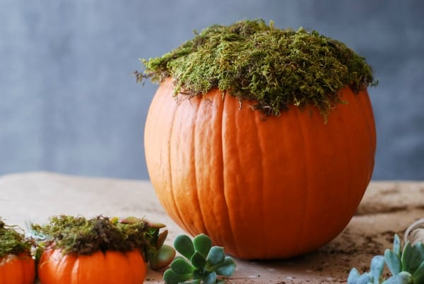 #DIY: Pumpkin Succulent Harvest Arrangement {tutorial via: simplyhappenstance.com}