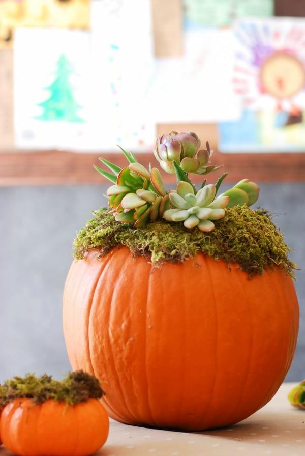 Pumpkin Succulent Arrangement {simplyhappenstance.com}-58