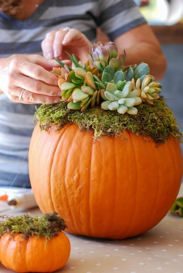 Pumpkin Succulent Arrangement {simplyhappenstance.com}-63