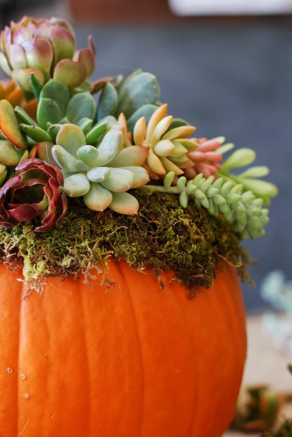 pumpkin succulent harvest decoration