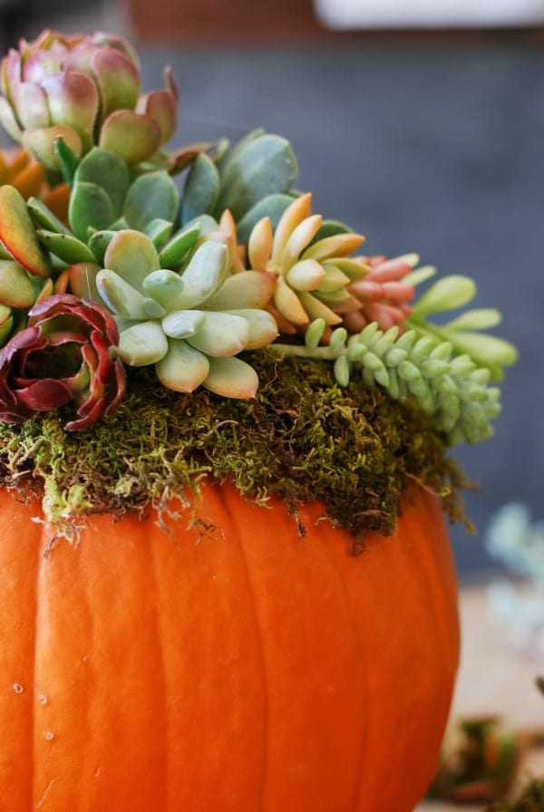 Pumpkin Succulent Arrangement {simplyhappenstance.com}-65