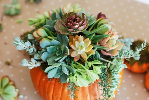 DIY Pumpkin Succulent Arrangement {tutorial and photos on simplyhappenstance.com} #falldecor #pumpkins #DIY