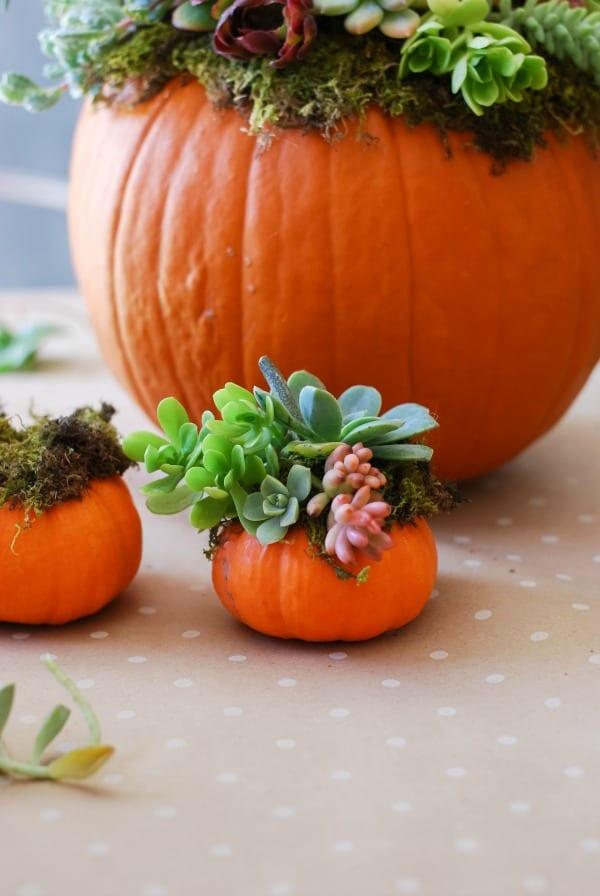 Pumpkin Succulent Arrangement {simplyhappenstance.com}-82