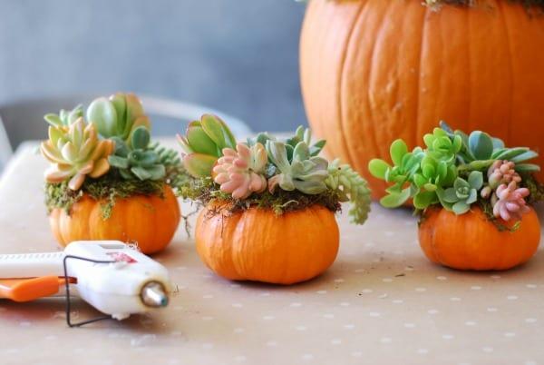 Pumpkin Succulent Arrangement {simplyhappenstance.com}-87