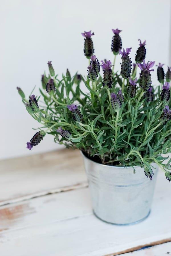 DIY Oatmeal and Lavender Bath Soak  simplyhappenstance.com
