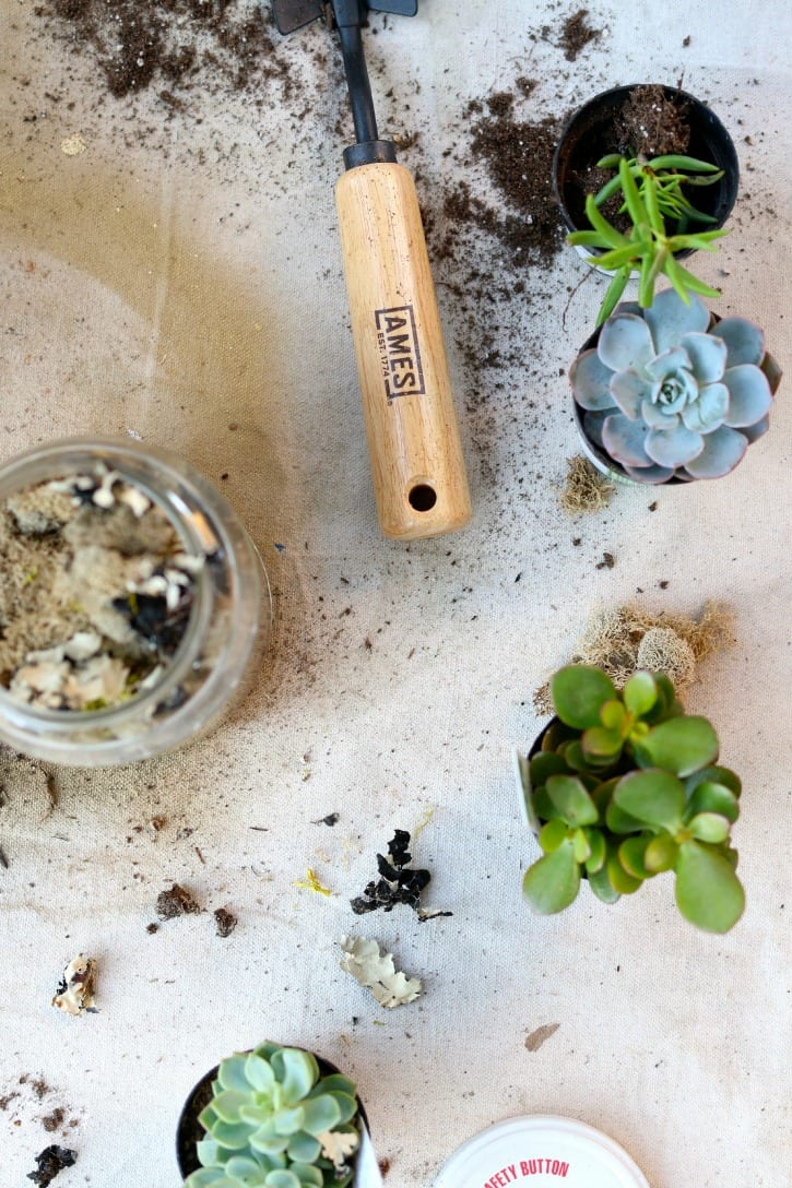 succulents foe blue and gold pots