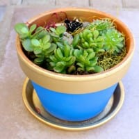 DIY Blue and Gold Succulent Pots for Boyscout Blue and Gold Dinner