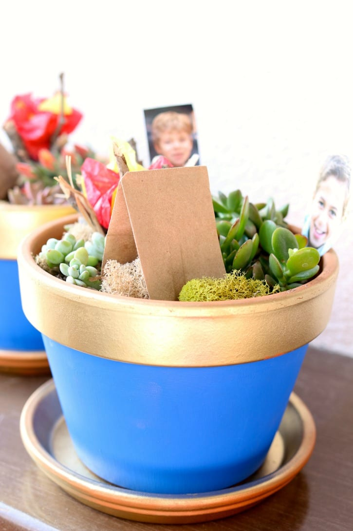 Blue and Gold Succulent Pots for Boyscout Blue and Gold Banquet